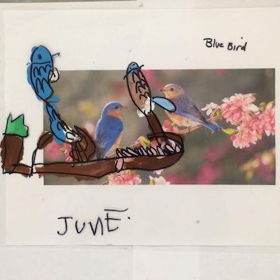 bluebird june